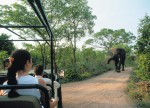 wild elephants on jeep safari