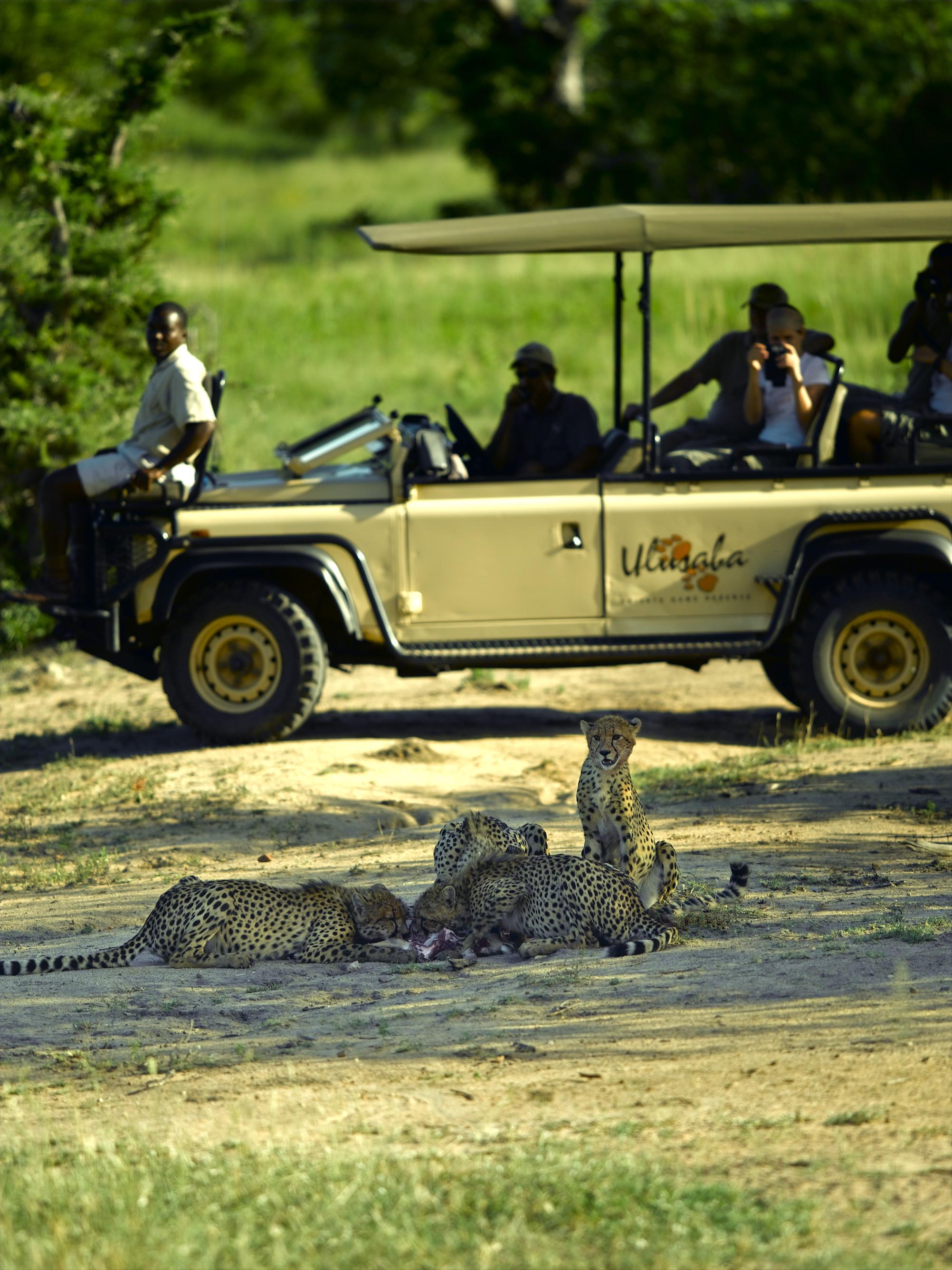 Rundreise Südafrika: Kapstadt – Winelands – Walker Bay – Garden Route – Shamwari Game Reserve