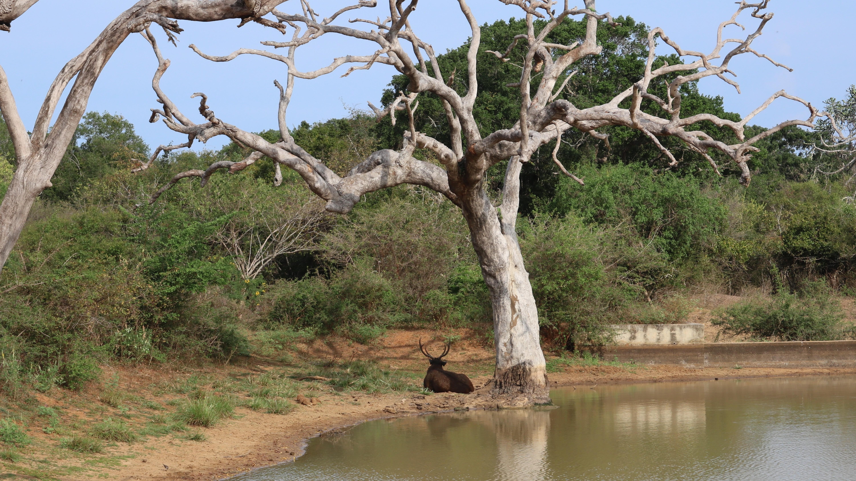 Sri Lanka Yala Nationalpark