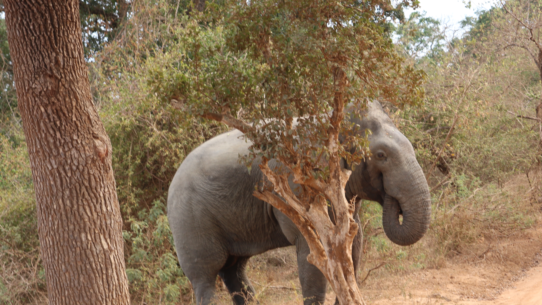 Der Yala Nationalpark ist bekannt für seine Elefanten und Leoparden.