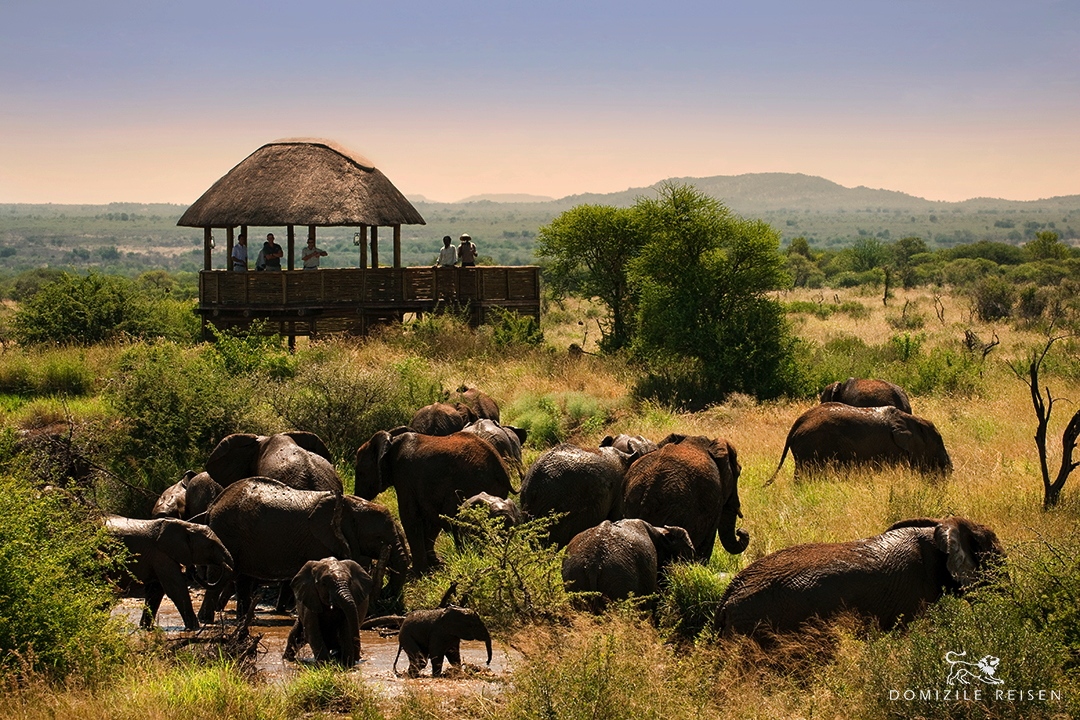 Big Five in Madikwe