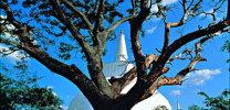 Anuradhapura Sri Lanka thumb