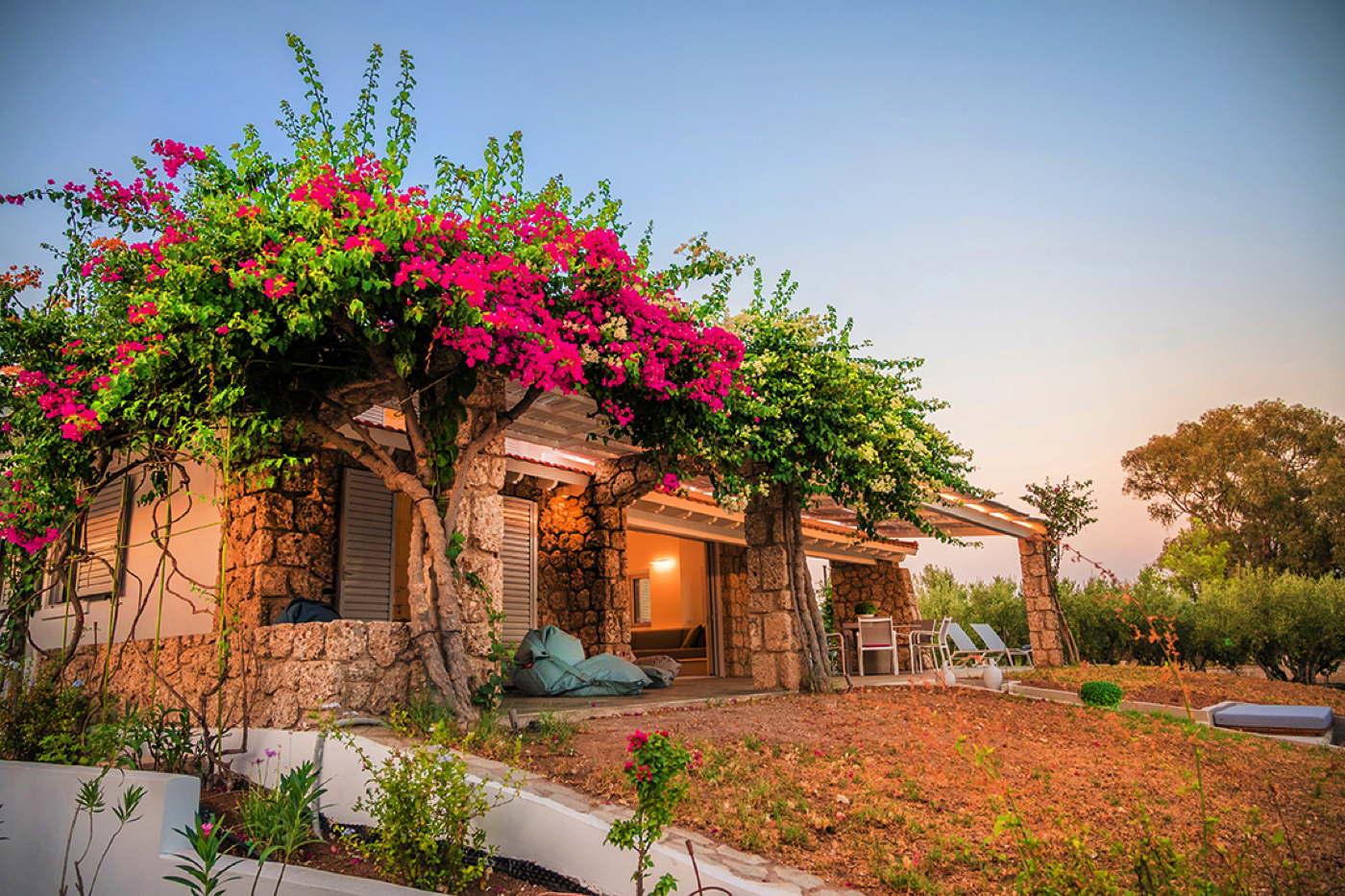 Asterias Garden