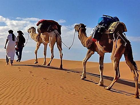 Kamelritt in der Wüste Marokkos