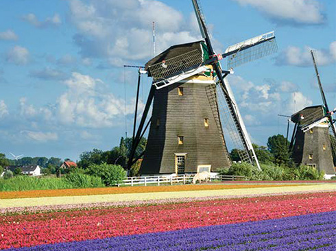 Holland windmills and tulips