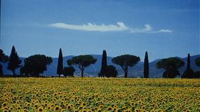 Reisebedingungen Ville in Italia