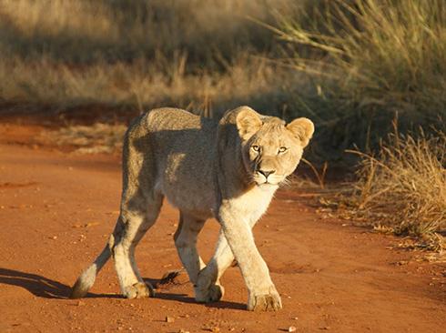 Namibia Landschaft und Sanddünen